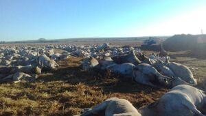 Mais de mil cabeças de gado morrem em fazenda de MS