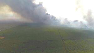 Vídeo: Incêndio de grandes proporções consome floresta de eucalipto