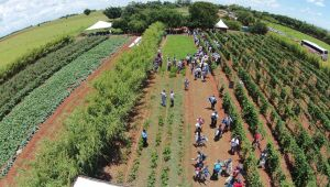 Projeto de hortifruti reúne 13 municípios em Paranaíba