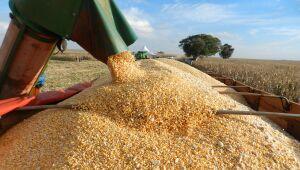 Milho segunda safra começa ser colhido em Mato Grosso do Sul