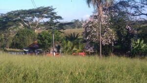 Mãe de Luiz Danilo conta que ele não gostava de morar na fazenda