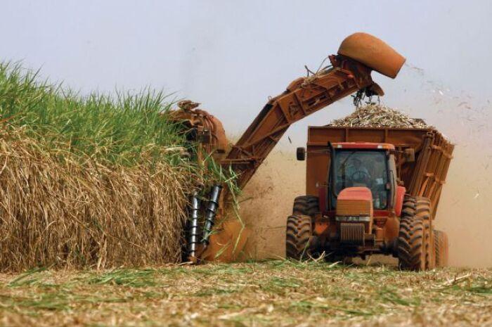 Safra brasileira de cana deve chegar a 636 milhões de toneladas