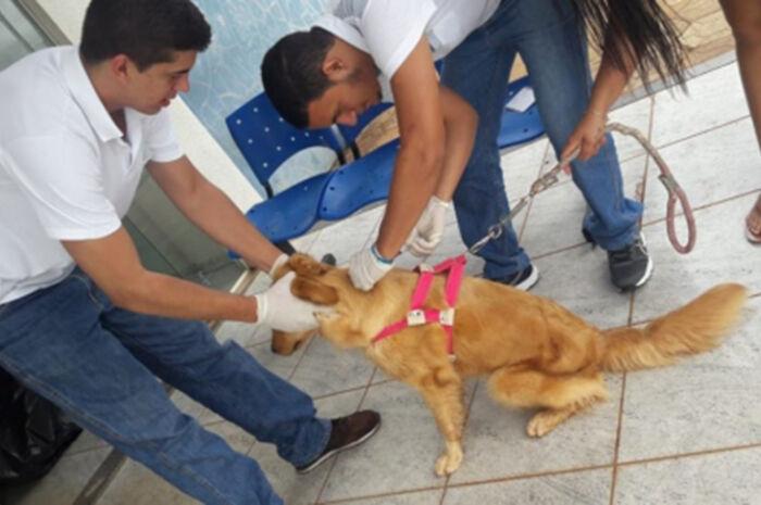 Inocência vacina mais de 400 animais em 'Dia D'