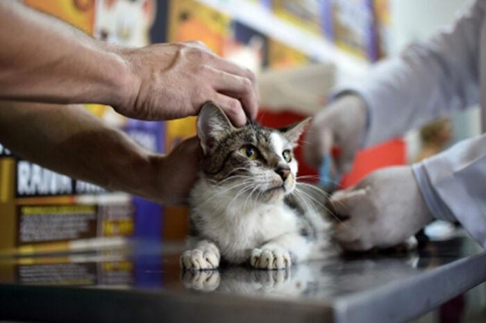 Inocência e São Pedro imunizam cães e gatos