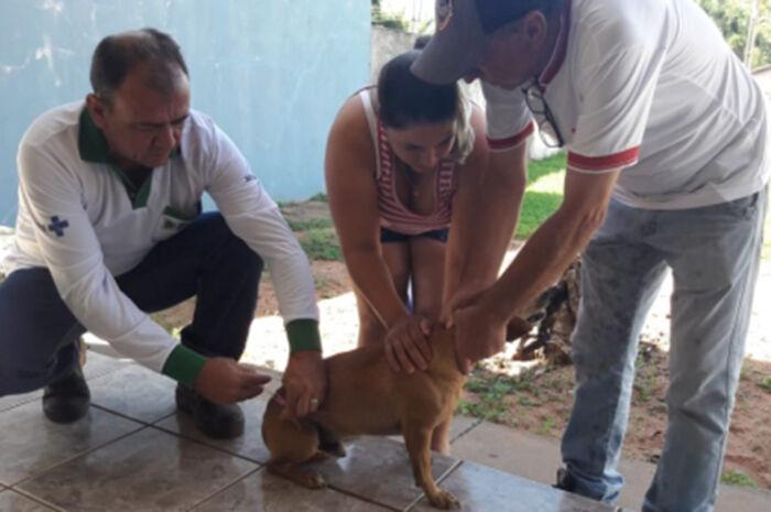 Vacinação antirrábica é realizada no Distrito do São Pedro