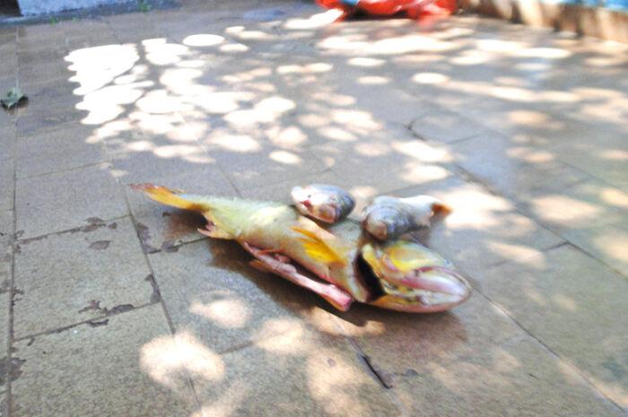 Pescador foge de fiscalização da PMA