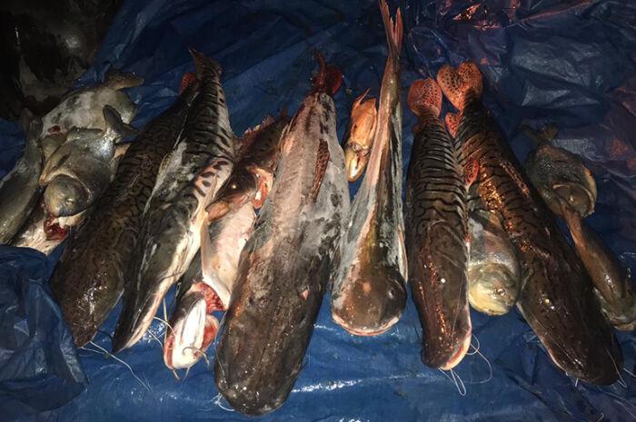 Polícia apreende 43 kg de pescado ilegal em pesqueiro