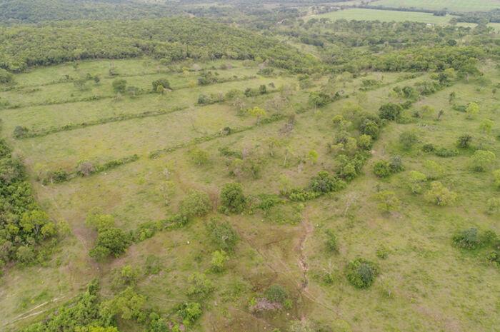 Fazendeiro é multado em R$ 11,6 mil por desmatamento ilegal