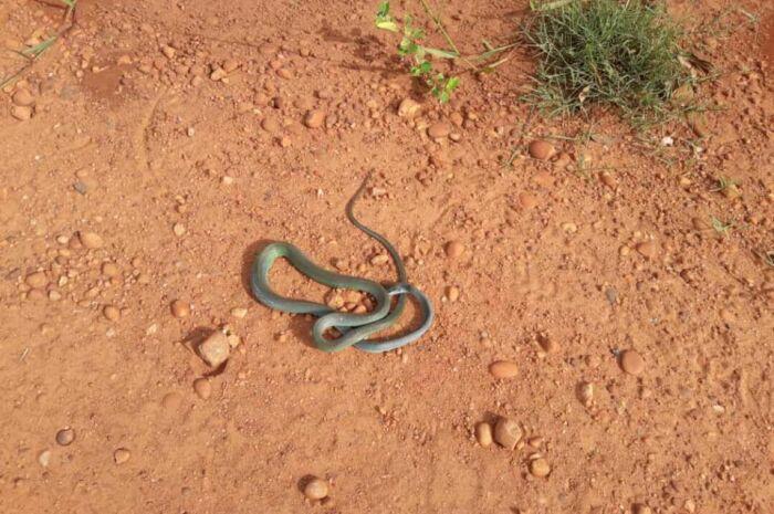 Moradores reclamam de aparição de cobras no Jardim Brasília