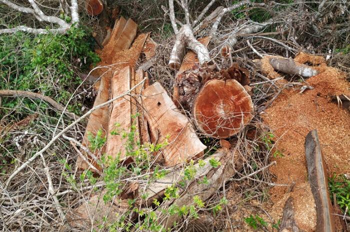 Fazendeiro é multado em R$ 7 mil por desmatamento ilegal