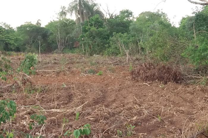 Pecuarista é multado em R$ 9 mil por exploração ilegal de madeira