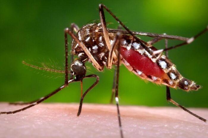 Em 37 dias, Três Lagoas registra 1,2 mil casos de dengue