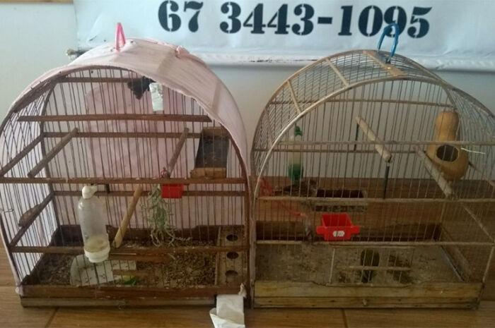 Morador de Nova Andradina é multado por criar pássaros ilegalmente