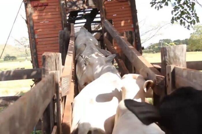 Governo alerta setor agro para atualização de cadastro