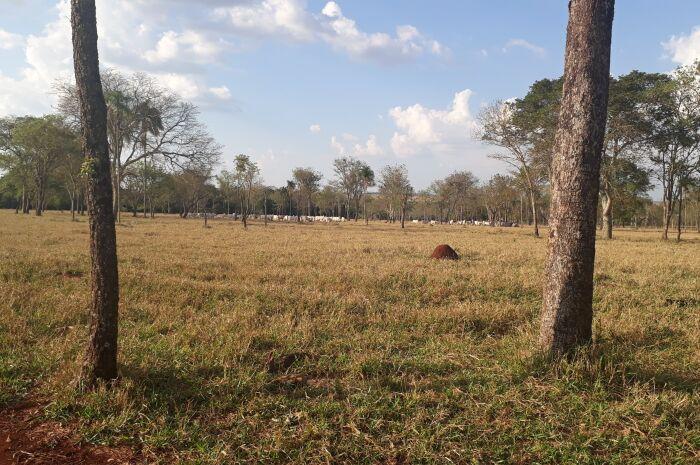 Área rural preservada no Brasil é 3,6 vezes maior que Noruega