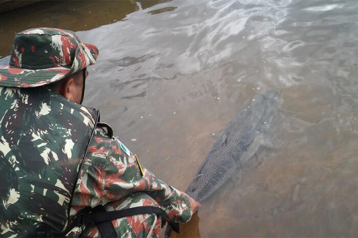 PMA solta peixe de um metro que estava preso em petrecho ilegal