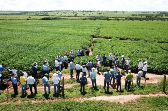 Área para cultivo da soja chega a 4 mil hectares em Paranaíba