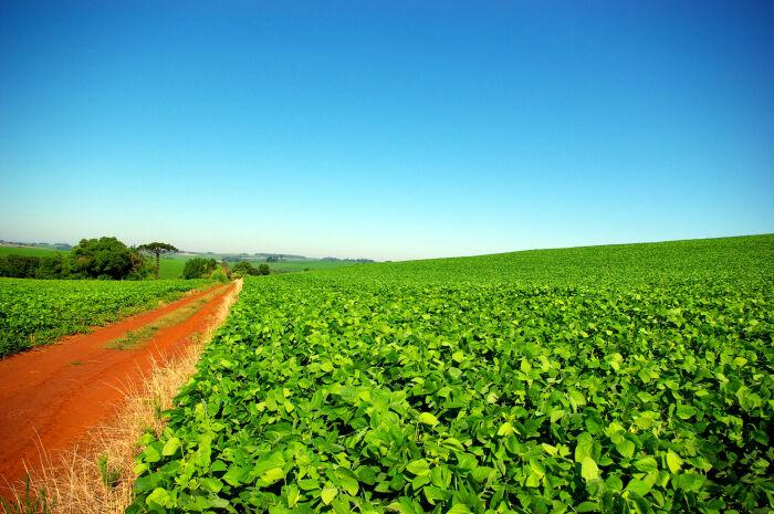 Falta de chuvas pode comprometer produção de soja no estado