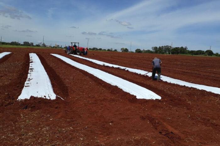 Projeto prevê expandir técnica que utiliza plástico para benefícios na horticultura