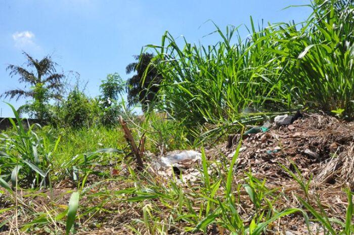 Mais de dois mil donos de terrenos sujos são notificados