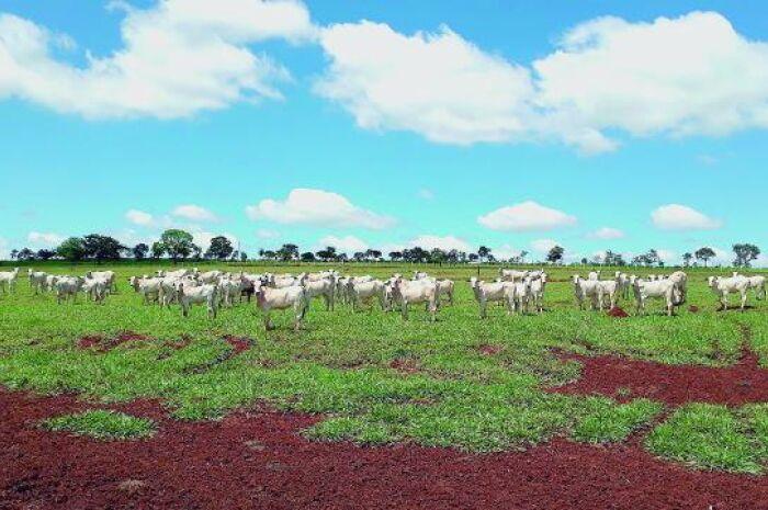 Chile reabre compra de carne sul-mato-grossense