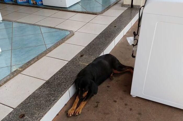 Tranquilo, cachorro se refresca em ar condicionado de loja no Centro