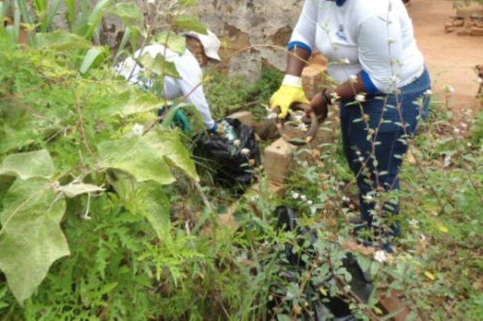 Estado registra novo tipo de vírus da dengue
