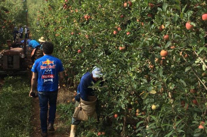 Funtrab abre mil vagas de emprego para trabalhadores da cultura da maçã