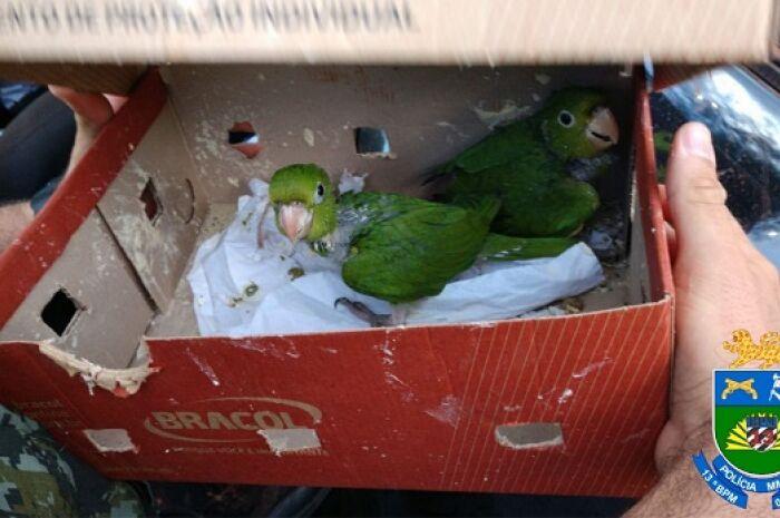 Em São Paulo, homens de Paranaíba são presos por tráfico de animais