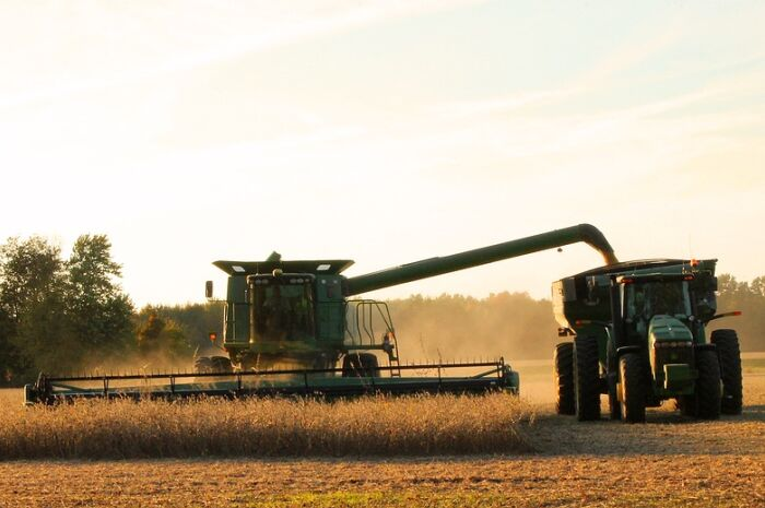 Fatores climáticos prejudicam lavouras de soja em MS