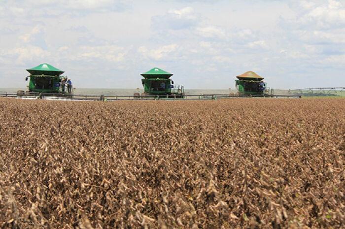 Estiagem prejudica lavouras e MS deve colher 9 milhões de toneladas de soja nesta safra