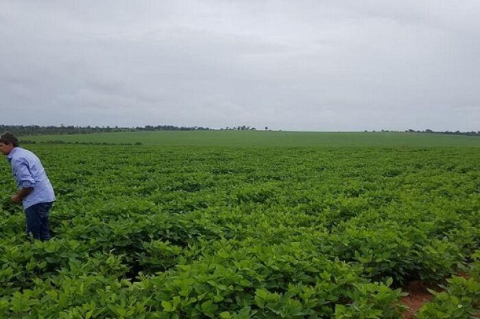 Solo fértil e investimentos milionários elevam hectares de soja plantados em Paranaíba
