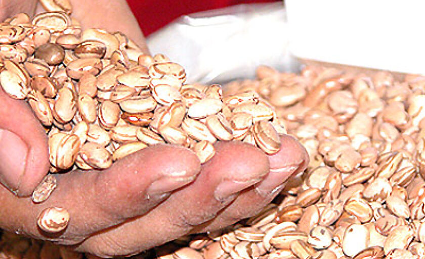 Produto importante na cesta básica, o feijão teve redução de 15% na saca de 60 quilos