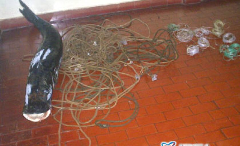 Material apreendido com o pescador foi encaminhado à Polícia Civil de Brasilândia