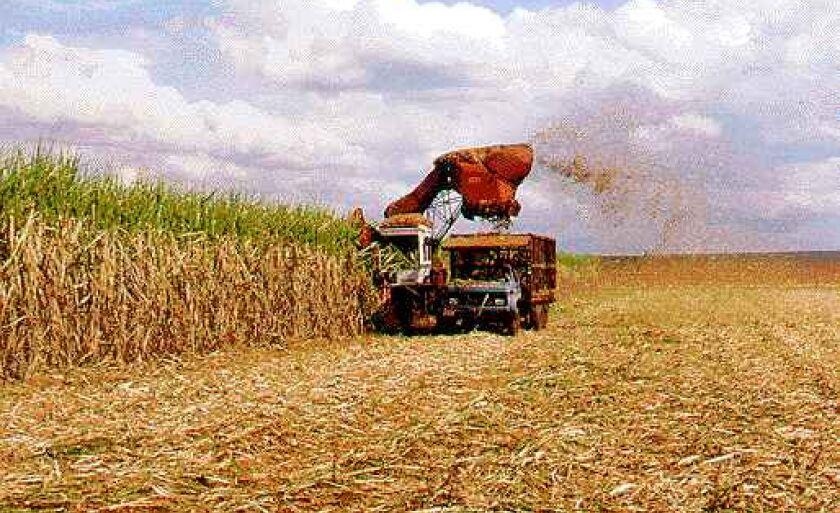 Plantio de cana deve ocupar 30 mil hectares em Paranaíba