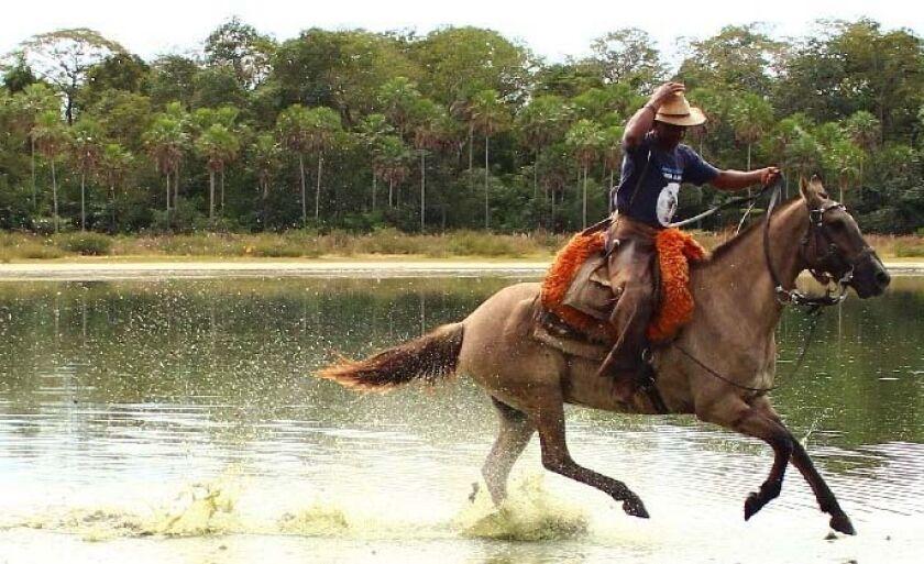 Cavalo Pantaneiro, uma raça genuinamente nacional, forjada por séculos no Pantanal