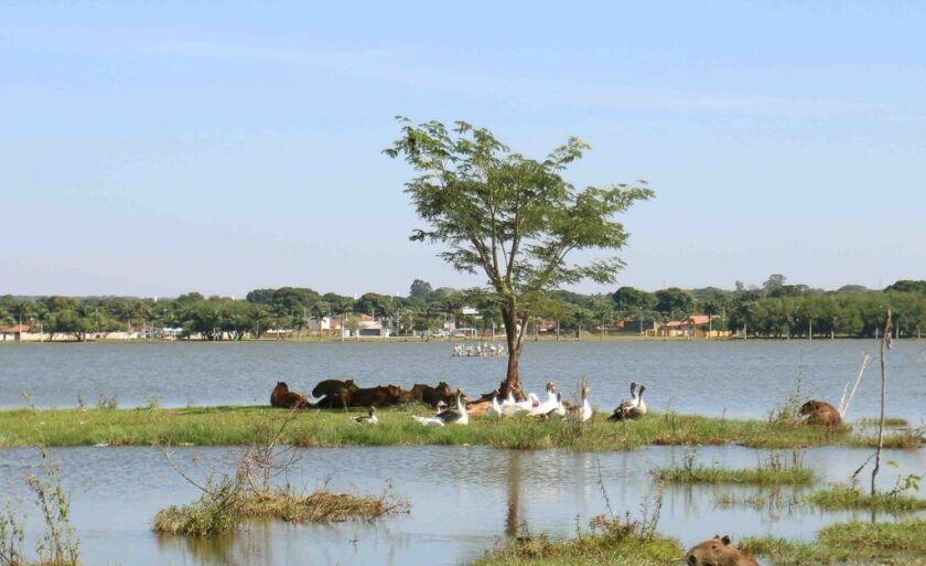 A Lagoa Maior é um dos principais cartões postais de Três Lagoas, por isso, é importante preservar a fauna e a flora para que possamos desfrutar das belezas naturais diariamente
