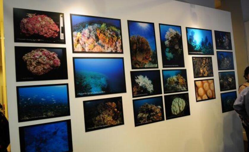 A exposição Rede Abrolhos: Monitorando o Maior Complexo Coralíneo do Atlântico Sul faz parte das comemorações do aniversário do Jardim Botânico