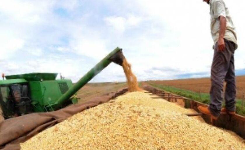 As três principais lavouras de grãos do país deverão ter crescimento neste ano: soja (17,2%), arroz (14,7%) e milho (52,3%)