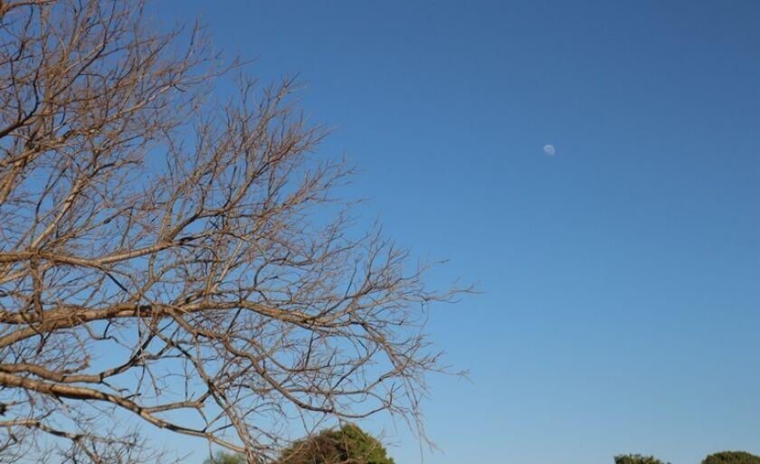 Paisagem muda com o inverno e estiagem, em Três Lagoas. Sem folhas, árvore chama a atenção e até mesmo a lua se destaca.