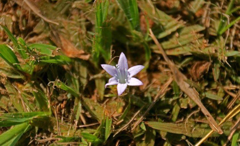A flor em um local singelo. Que seja assim o fim de semana para toda a população