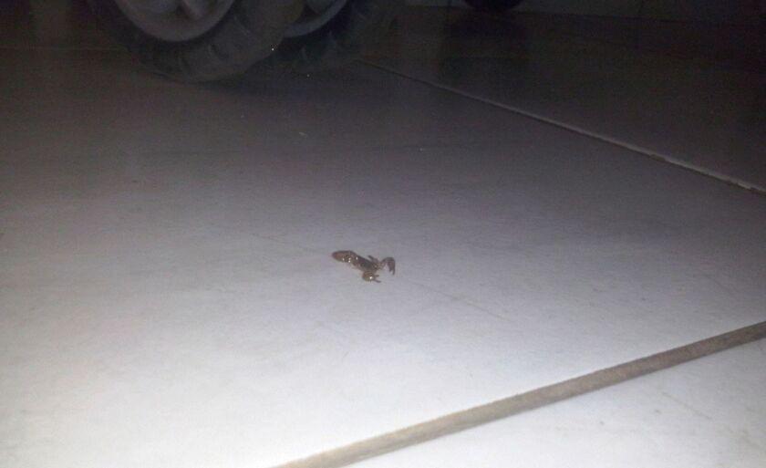 Escorpião foi encontrado no bairro Nova Três Lagoas