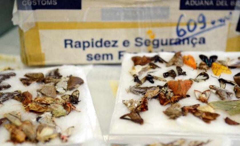 Espécimes da fauna e da flora apreendidos pela Receita Federal nos Correios