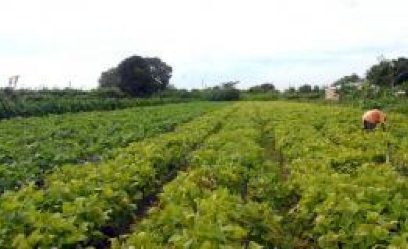 Política do governo garante preços mínimos para produtos da agricultura familiar