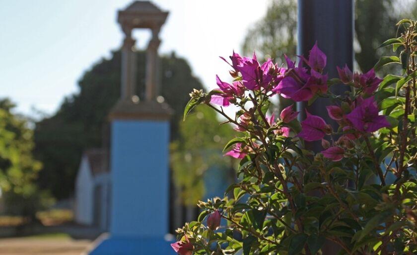 """Flores colorem o inverno, na praça José Carlos de Souza, """"Bitão"""", em Três Lagoas, antigo local onde era realizada a Feira de Gado."""