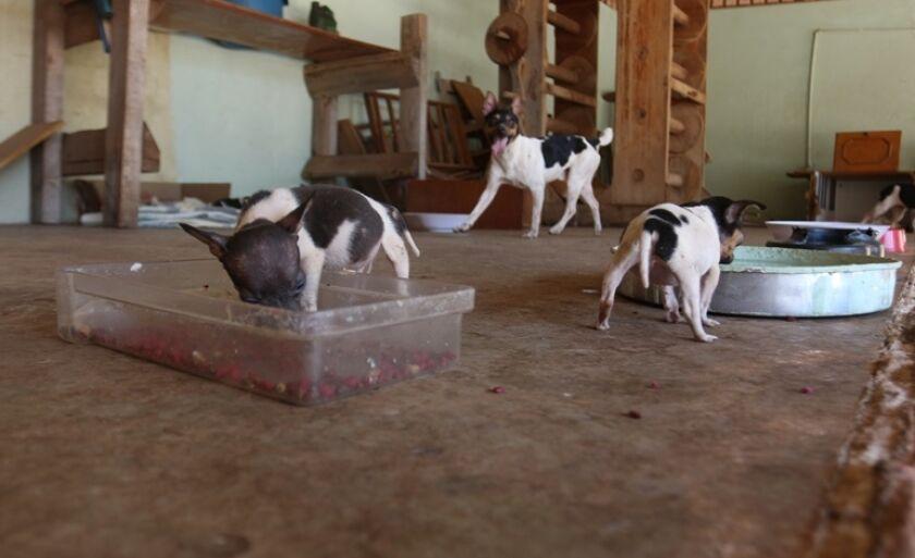 Cães recebem atendimento voluntário e necessitam de doações para re realização de exames de sangue