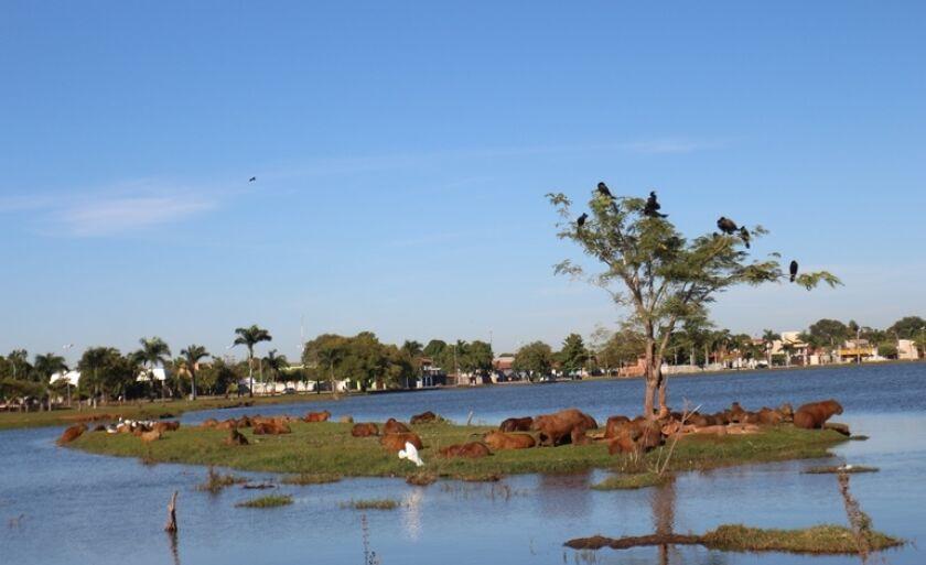 Técnico da UFMS de Campo Grande vai analisar excesso de capivaras na Lagoa Maior de Três Lagoas