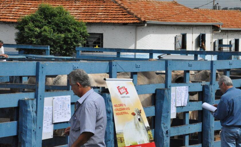 A feira é aberta para qualquer proprietário de touro do país, não sendo restrita apenas aos proprietários de Paranaíba