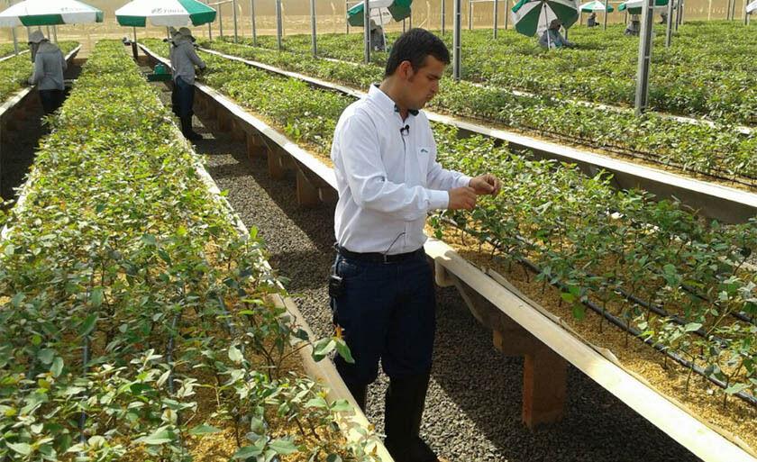 O novo viveiro automatizado tem capacidade para produzir 43 milhões de mudas de eucalipto
