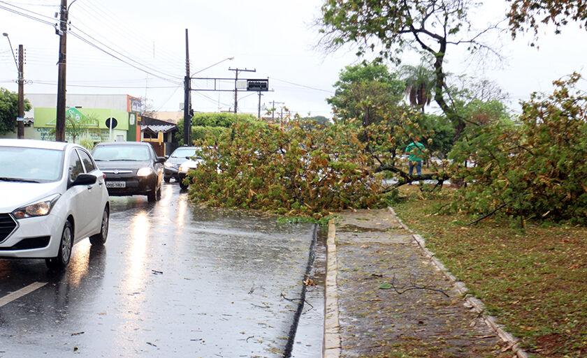 Chuva forte nesta segunda (2) derruba árvore na avenida Eloy Chaves